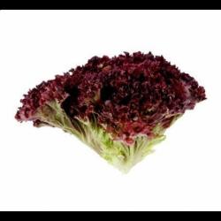 Салат червоний Лолло Росса