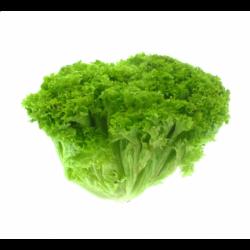 Салат зелений Біонда